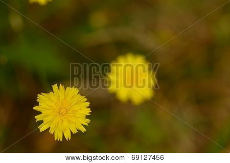 an yellow flower growing out of weeds