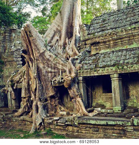 Giant tree ?? Siem Reap
