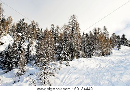 Ski Run In Snow Forest On Mountain In Dolomites, Italy
