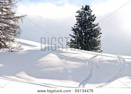Skiing Tracks Around Fir Tree In Dolomites, Italy