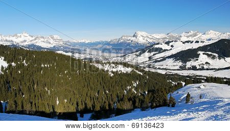 Fir Forest On Alps Mountains