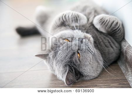 Cat Screwing Up Its Eyes