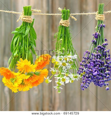 fresh marigold flowers, chamomile and lavender
