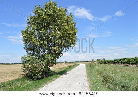 Landscape of  Languedoc