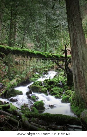 Oregon Stream