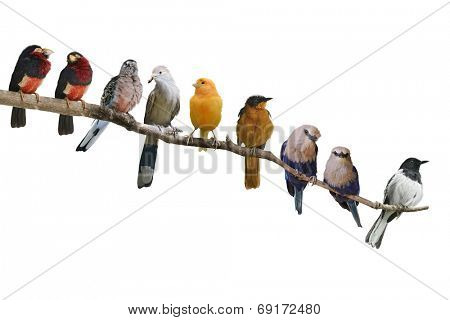 Perching Birds Isolated On White Background