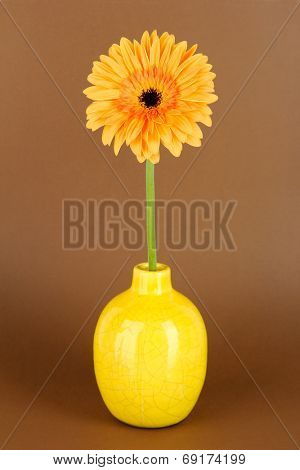 Beautiful Gerber flower on brown background