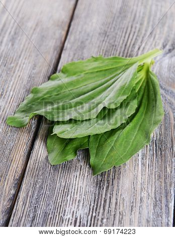 Plantain leaves on wooden background