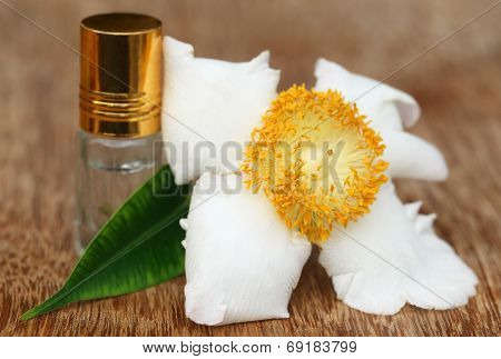 Nageshwar Flower Of Indian Subcontinent With Essence Bottle