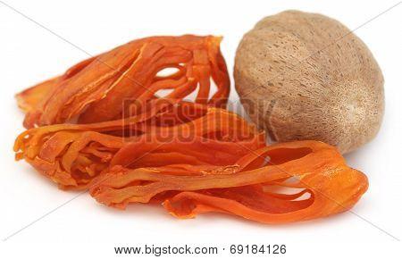 Mace Or Javitri Spice With Nutmeg