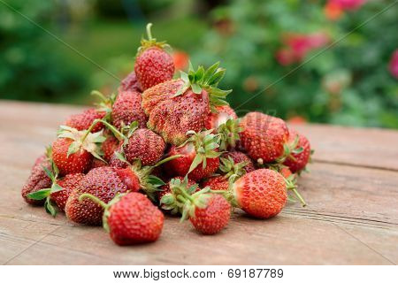 Pile of just gathered strawberries on an old table