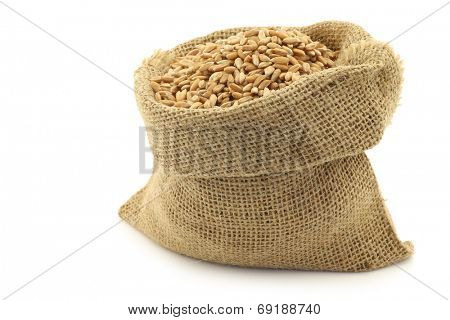spelt in a burlap bag on a white background