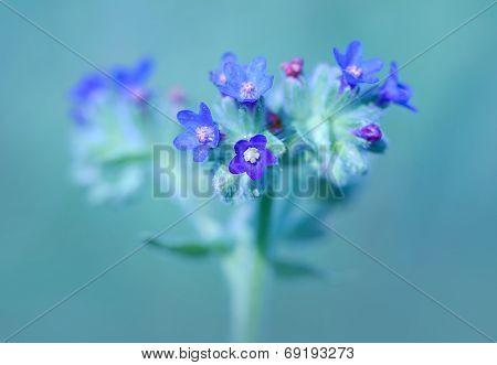 Beautiful Wildflower Blossom In The Field