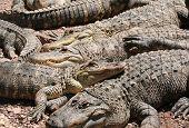 Pile Of Crocs poster