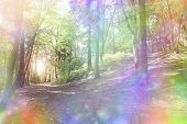 foto of unique landscape  - Woodland path and light shining through trees with a fantasy rainbow aura - JPG