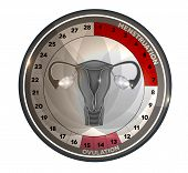 picture of ovary  - Menstrual cycle calendar days of menstruation and ovulation - JPG