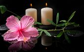 picture of tendril  - Beautiful spa concept of hibiscus tendril passionflower candles and zen stones with drops on reflection water closeup  - JPG