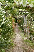 pic of pergola  - The romantic alley - JPG