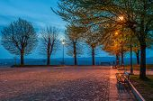 pic of early spring  - Bench under the tree illuminated by light from lamppost on small cobbled square early in the morning - JPG