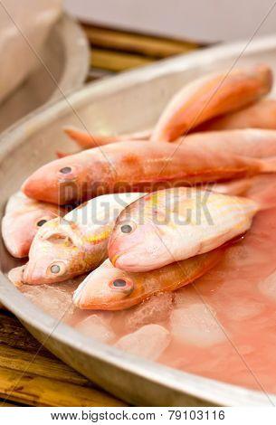 Ornate Threadfin Bream Fish In Market.
