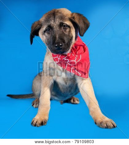 Thin Yellow Puppy In Red Bandanna Sitting On Blue