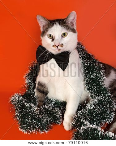 White And Tabby Cat In Bow Tie And Christmas Tinsel Sitting On Orange