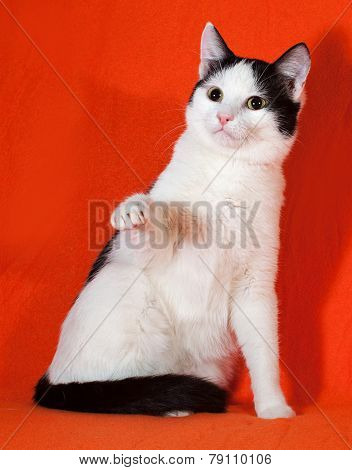 White With Black Spots Kitten Sitting On Orange