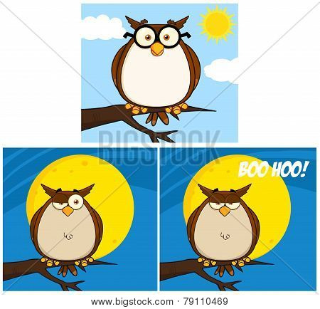 Funny Owl Cartoon Character. Collection Set