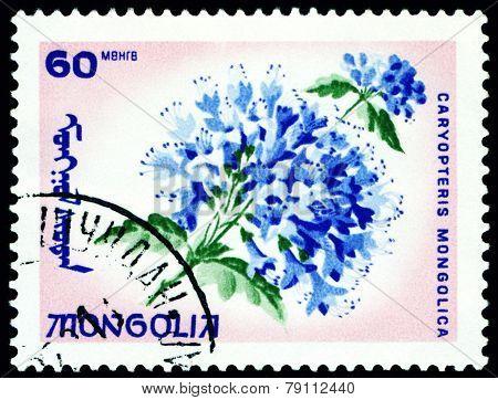 Vintage  Postage Stamp. The Flowerses Caryopteris Mongolica.