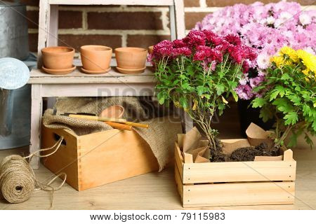 Flowers in wooden box, pots and garden tools on bricks background. Planting flowers concept