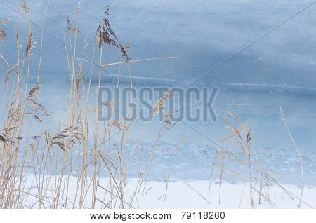 Reeds In Cold Sea