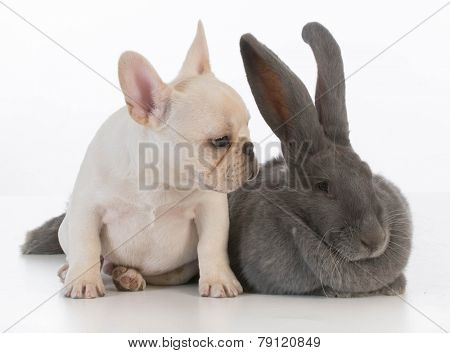 cute puppy and bunny rabbit on white background