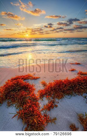 Colorful early sunrise over beautiful sea shore with a bright seaweed foreground
