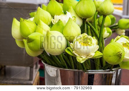 Lotus Flower For Buddhist People To Respect