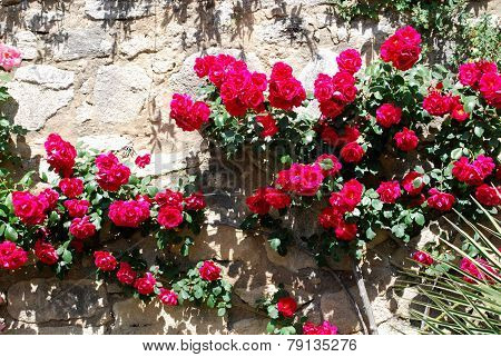 Red roses against a stone wall.
