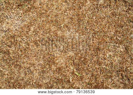 Wet Dry Turf