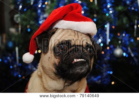 Christmas Pug Wearing A Santa Hat