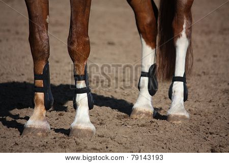 Close Up Of Horse Legs With Protection Boots