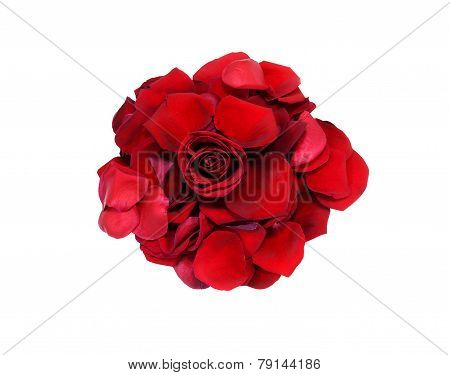 Wilted red rose with petals around