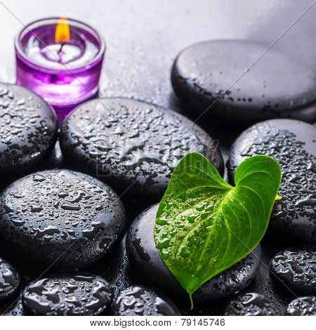 Beautiful Spa Still Life Of Green Leaf Calla Lily, Ice And Lilac Candle On Zen Basalt Stones With Dr