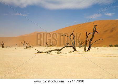 Sosssusvlei Desert, Namibia