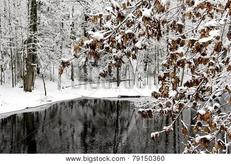 Winter Lake And Trees Covered With Snow
