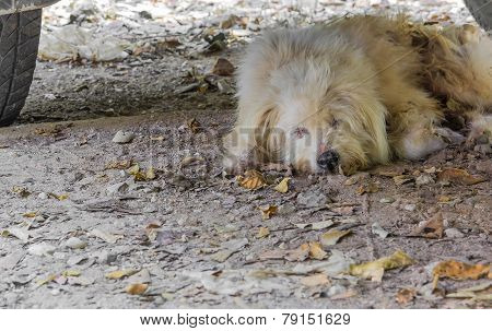 Stray Dog Sleeping Under A Parked Car