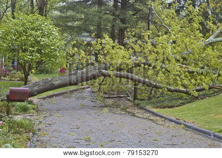 Tree And Power Lines Down On A Road