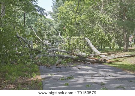 Tree Debris Blocks A Road