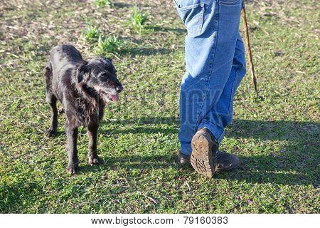 Shepherd Man With His Dog