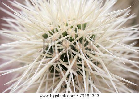 white quills