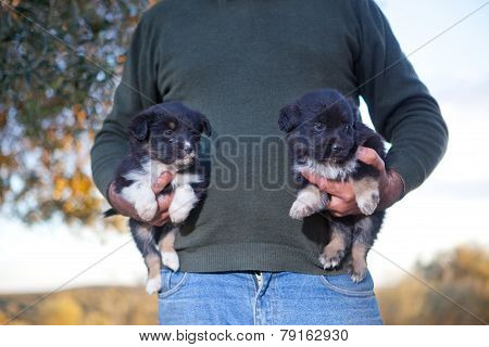 Two Baby Dogs