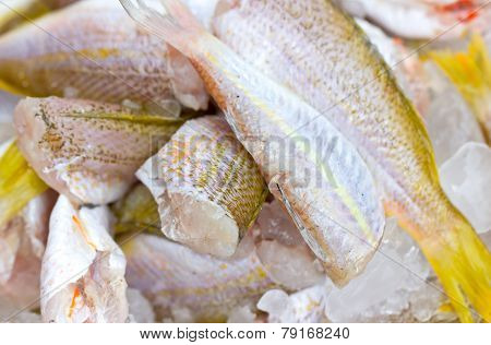 Ornate Threadfin Bream Fish With Ice.