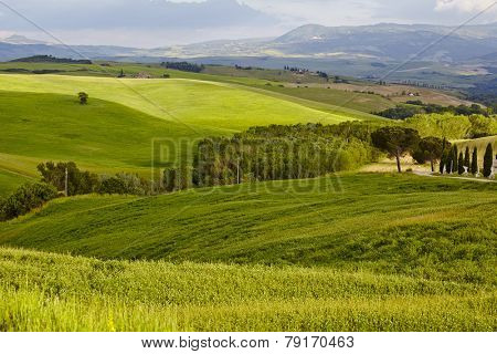 Countryside, San Quirico d`Orcia , Tuscany, Italy
